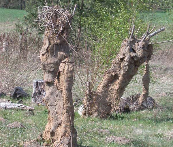 Skulpturen aus Weidenzweigen und Lehm