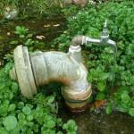 Brunnenkresse an der Quelle