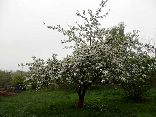 Apfel14240163