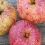 3 Äpfel Gravensteiner