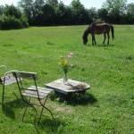Zwei Stühle mit Blumenstrauß und Pferd