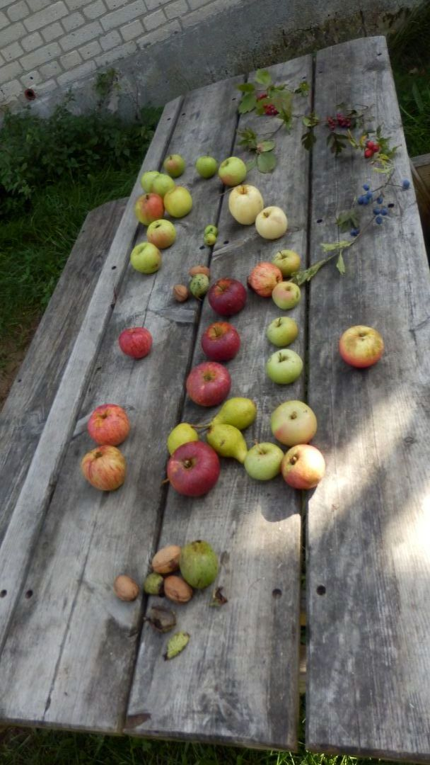 Erntetisch mit Äpfeln hochkant