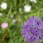 Blüte scharf vor unscharfen Hintergrund