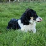 Hund mit Zunge