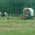 Pferdewagenbesuch in Billerbeck