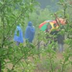 Naturführung im Regen