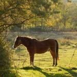 Unser Pony sonnt sich