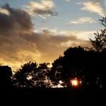 Sonnenuntergang hinter dem Wald von Billerbeck