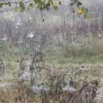 Spinnennetze im Rainfarn