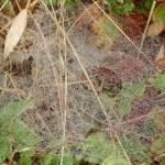 Baldachin - Spinnennetz