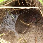 kaputtes Spinnennetz